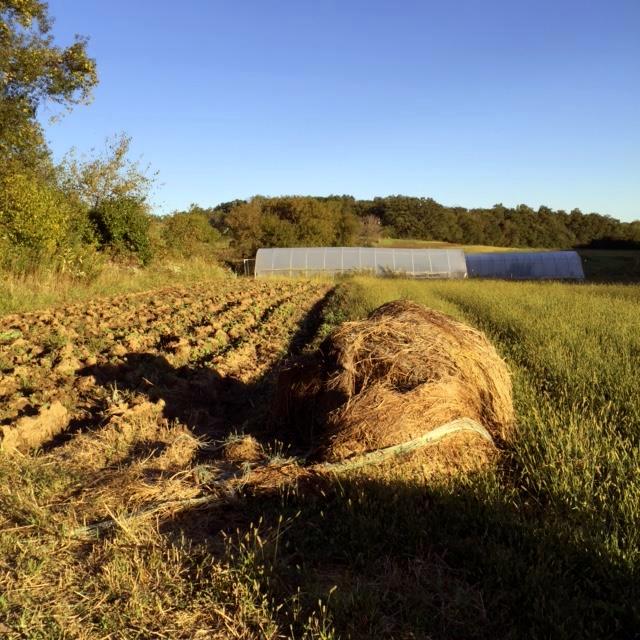 Farming-harvest