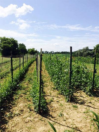 farming-field3