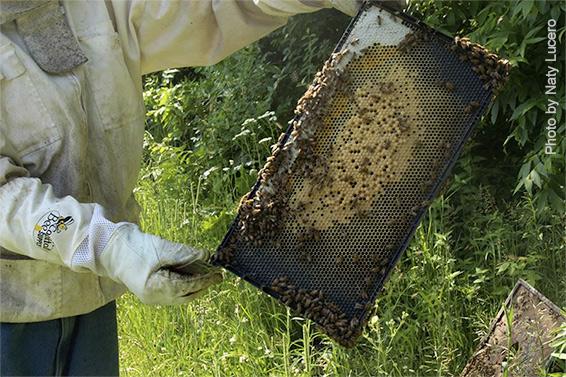 Bees-comb