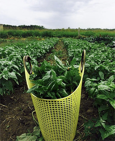 farming-field1