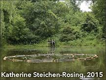 Katherine Steichen-Rosing